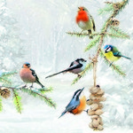 13310580 Servetten 5st Winter vogels 2