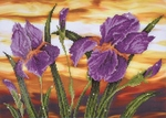Dd9.016 Diamond Dotz Iris sunset