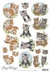 Cd11457 3D Knipvel - Amy Design - Cats